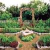Огород с декоративными овощами