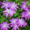 Прекрасные цветы