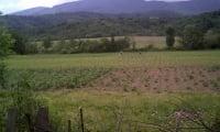 Огороды Закарпатья