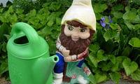 Подкормка и полив  растений