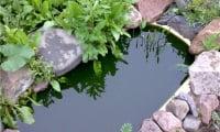 Старая ванна для выращивания кувшинок