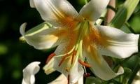 На цветы можно смотреть, любоваться ими, наслаждаться их ароматом, но не только.