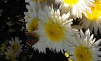 Солнышки с белоснежными пальчиками