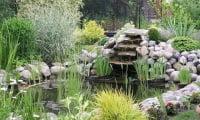Растения для украшения водоема