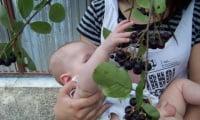 Черноплодку можно давать даже детям