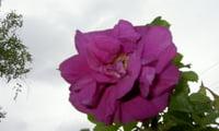 Вот он, мой любимый цветок!