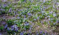 Какие цветы можно вырастить в тенистом саду