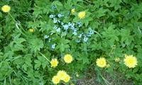 Это то, что росло на моём огороде изначально)