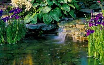 Болотные растения в садовом водоеме