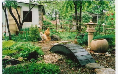 Японский садик на даче и нам это