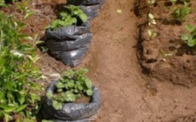 Способ выращивания