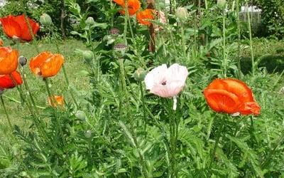 Тенелюбивые неприхотливые комнатные цветы названия 64