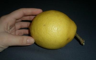 Плод лимона,вырощеный в домашних условиях.