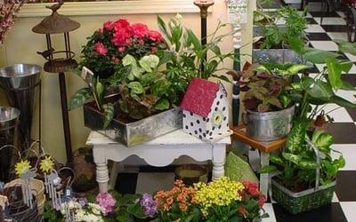 Каллы цветы комнатные цикламен