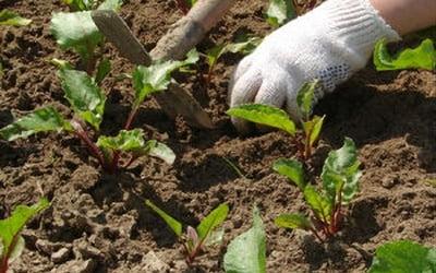 Loosening Soils.jpg