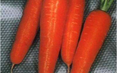 Первая морковка самая сладкая