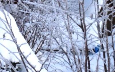 снегование