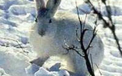 Зайцы погрызли
