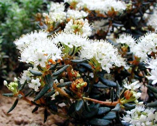 Цветущие растения для болотистой